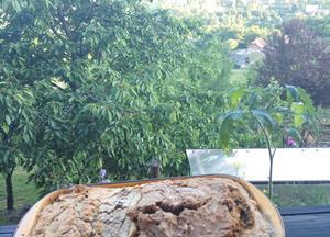 Sambucus bread (Bezgov kruhek)